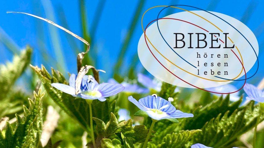 Biblischer Frühling | © Foto: Karl-Heinz Kronawetter