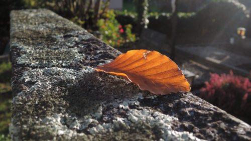 Auf dem Friedhof im Herbst (Foto © KH Kronawetter)