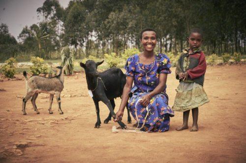 """""""Ziegen für Familien in Burundi"""" (Foto: Jork Weismann / Caritas)"""