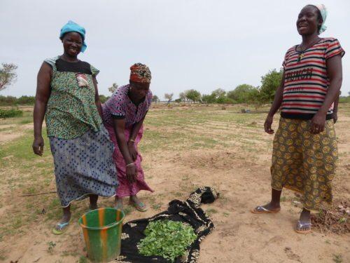 Burkina Faso (Welthaus)