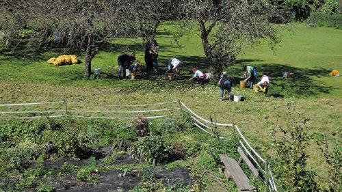 Die Ernte im Garten schärft den Blick für das Verhältnis zwischen Anstrengung und Ertrag und lehrt einen Widerwillen gegen die Verschwendung. (Foto: Neumüller)