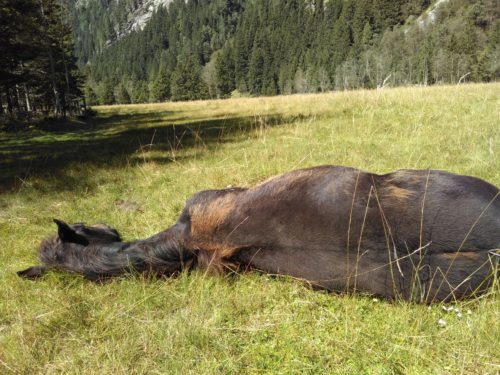 Ehrfurcht vor dem Tier - ein Leben mit Ruhephasen in der freien Natur gönnen (© Foto: fotomax)