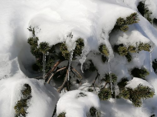 Pod snežno odejo (FJT)