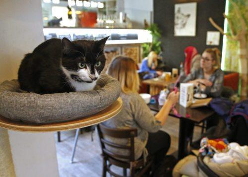 Gemütliches Ambiente im Katzencafé. Foto: Eggenberger