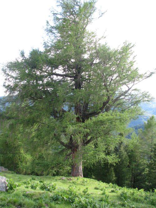 Nachhaltige Forstwirtschaft (© Foto: Mag. Ingrid Strießnig)