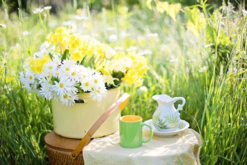 Cvetoča pomlad klikni tukaj, povezava v nemščini! - Blumenwiese hier anklicken! (Bild: Jill Wellington auf Pixabay)