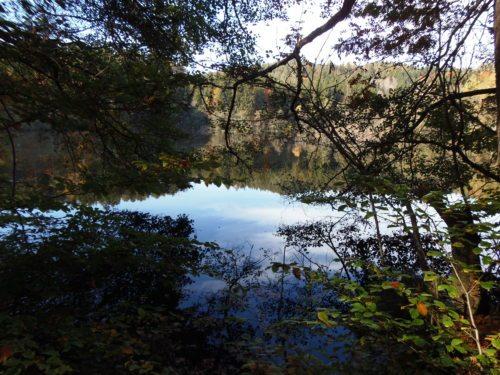 Herbstmotiv (© Foto: Monika Gschwandner-Elkins)