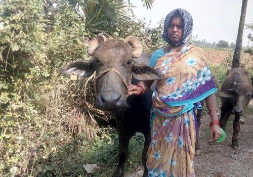 Palle Mariamma mit Milchbüffel Foto: Kaplan Joseph Lakkapamu